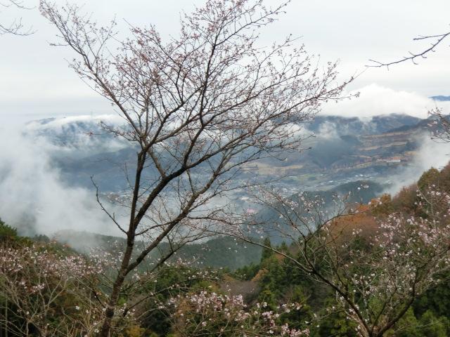 桜山公園に冬桜を見に行ってきました。